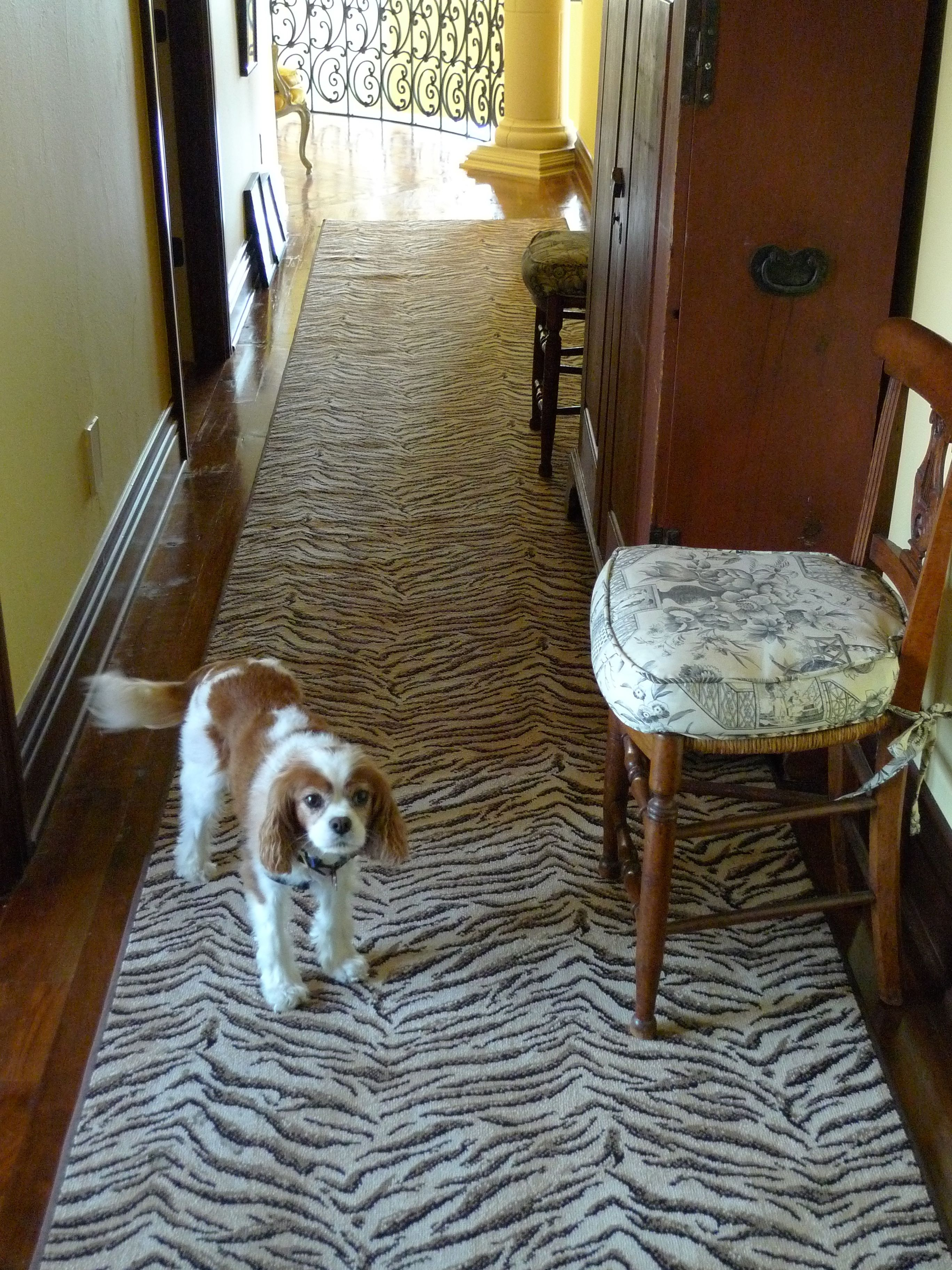 Animal Print Archives Schroeder Carpet